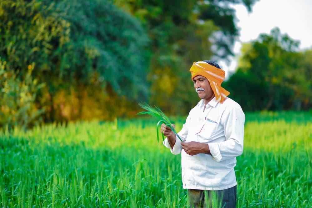 plantes aromatiques indiennes
